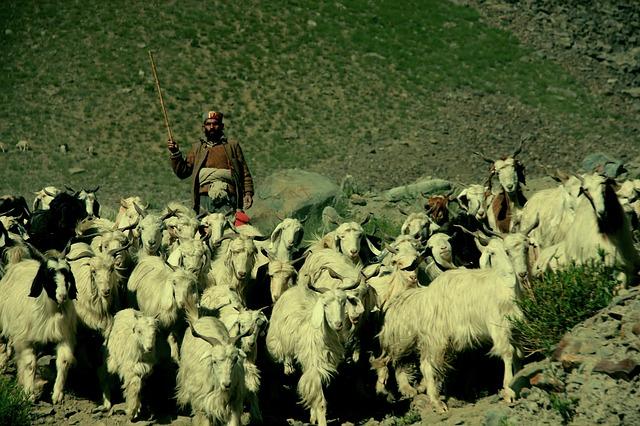 shepherd-489292_640