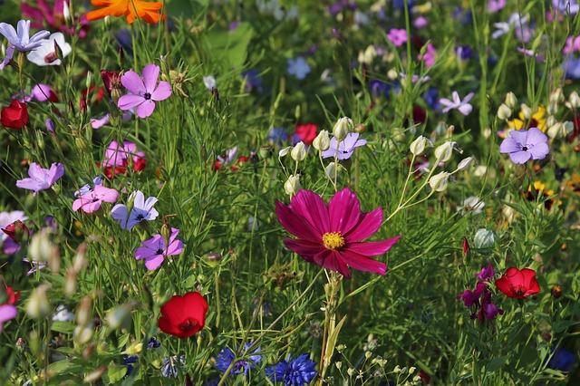 wildflowers-3571119_640